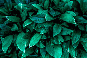 tropical leaves, abstract green leaves texture, nature background Wall mural