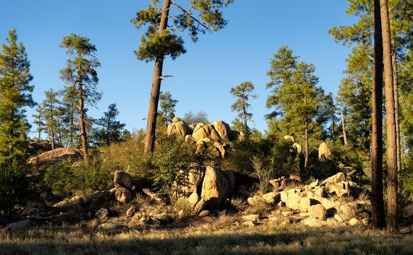Camp Wood Granite Boulders