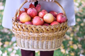 juicy apples in a basket in the garden