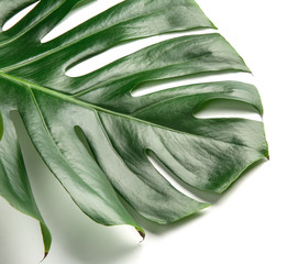 Wall Mural - Green tropical leaf isolated on white