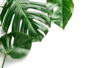 Fototapeta Fresh tropical leaves on white background obraz