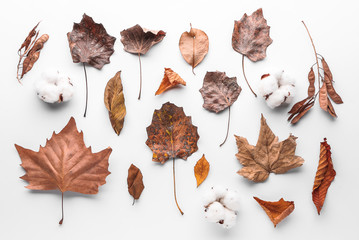 Autumn leaves and cotton flowers on white background Wall mural
