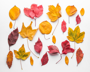 Wall Mural - Colorful autumn leaves on white background