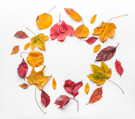 Wall Mural - Frame made of autumn leaves on white background