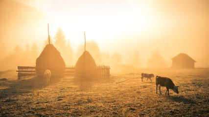Beautiful landscape Romanian village foggy sunrise sunlight fog Romania idyllic countryside country life rural Fototapete