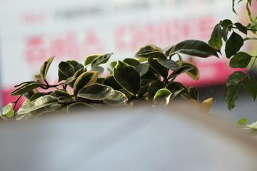 화분의 꽃을 집중 시킨 사진입니다