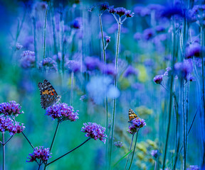 the garden with flowers and butterflies