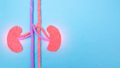 Human kidneys on a blue background. Human kidney disease concept, pyelonephritis, kidney stones, infection, copy space