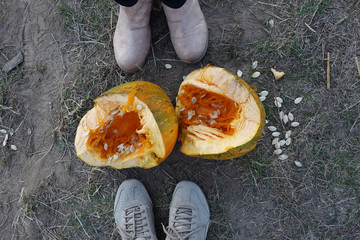 broken pumpkin on the ground