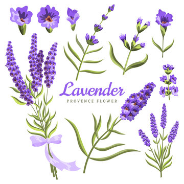Lavender. Set of watercolor lavender flowers and symbols on the white background, aquarelle. Vector illustration. Hand-drawn floral decorative elements useful for invitations, scrapbooking, design.