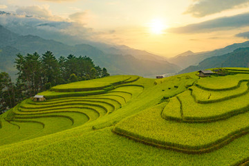 Tuinposter Rijstvelden Aerial top view of paddy rice terraces, green agricultural fields in countryside or rural area of Mu Cang Chai, Yen Bai, mountain hills valley at sunset in Asia, Vietnam. Nature landscape background.