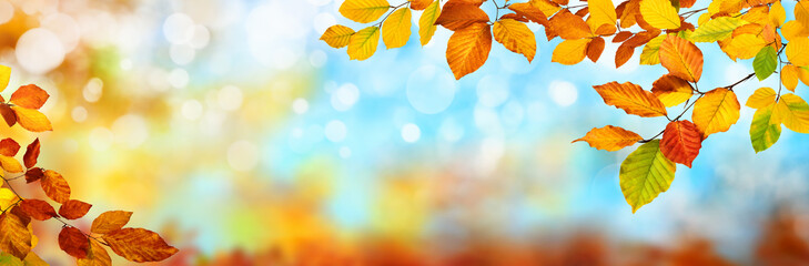 Colorful autumn background in panoramic format, with red, yellow and green leaves framing blue bokeh highlights
