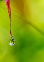 Red leaf with dew drop on the end and blurred garden in the background - Leaf with water drop on the end