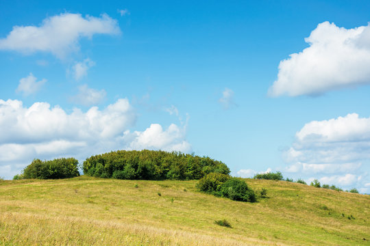 small forest on the hill. simple countryside scenery in early autumn or spring. blue sky with puffy clouds