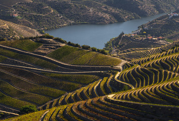 UNESCO World Heritage, the beautiful endless lines of Douro Valley Vineyards, in Sao Joao da Pesqueira, Viseu, Portugal.