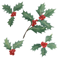 hand drawn watercolor collection of holly bunches isolated on white background, for Christmas holiday design, botanical illustration
