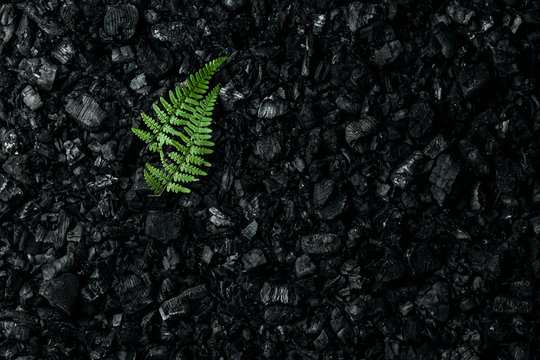 Nature concept, Frame of green twigs and leaves on a dark coal background. Environmental pollution, coal mining, clean air, clean energy source.