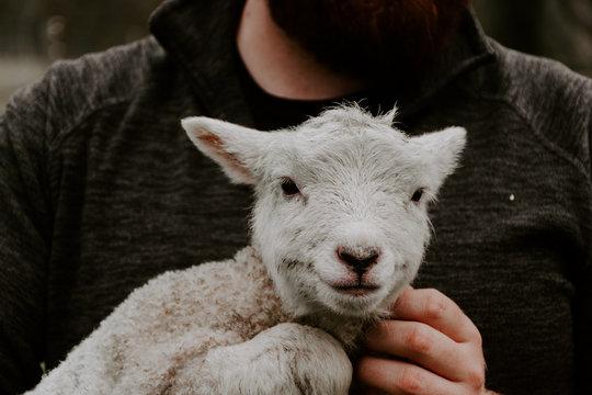 Happy Lamb in Arms of Farmer