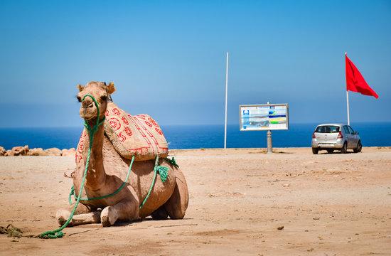 Camello en Playa de Tánger