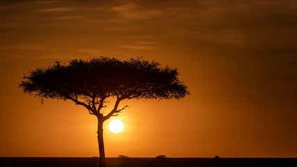 Wall Mural - Beautiful Golden African Sunset Tree Silhouette