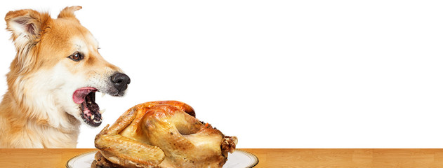 Hungry Dog Stealing Turkey Web Banner