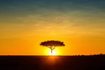 Wall Mural - Silhouette African Sun Behind Tree