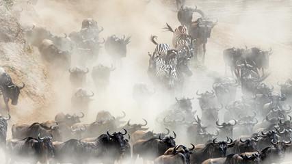 Wildlife Mad Rush Herd Stampede