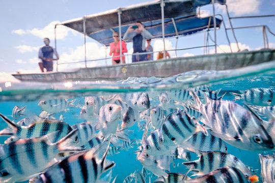People on board a boat watching scissor tail sergeant fish in tropical waters of fiji