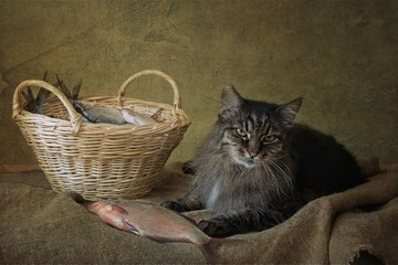 Curious cat and basket of fish