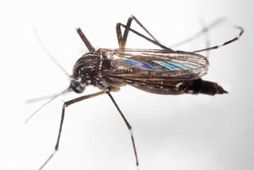 Macro Photo of Yellow Fever Mosquito on White Floor