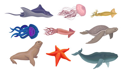 Marine Life Creatures Vector Volume Illustration Set