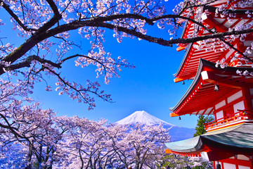 Fotorolgordijn Kersenbloesem 春の桜咲く新倉山浅間公園内の五重塔と富士山