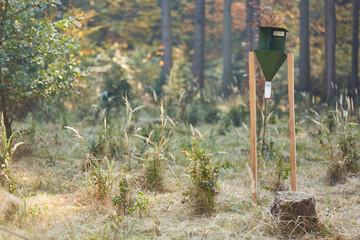 Borkenkäferfalle in einem Wald mit Setzlingen