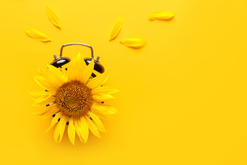 Sunflower with alarm clock on color background