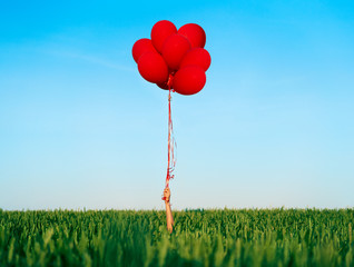 Obraz Hand holding red balloons in summer green field - fototapety do salonu
