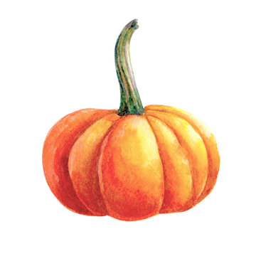 Watercolor pumpkin painting isolated on white background. Autumn harvest. Vegetarian raw food. Hand drawn sketch of a happy Thanksgiving Pumpkin.