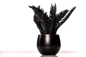 Contrast - Black Plant on White