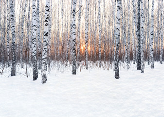 Poster de jardin Bosquet de bouleaux Winter landscape. Birch forest at sunset. Freshly clean snow