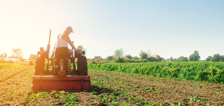 Tractor cultivates the soil after harvesting. A farmer plows a field. Pepper plantations. Seasonal farm work. Agriculture crops. Farming, farmland. Selective focus