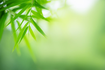Bamboo leaves, Green leaf on blurred greenery background. Beautiful leaf texture in nature. Natural background. close-up of macro with free space for text.