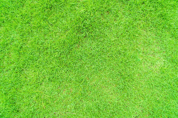 Green grass texture background, Green lawn, Backyard for background, Grass texture, Green lawn desktop picture, Park lawn texture.