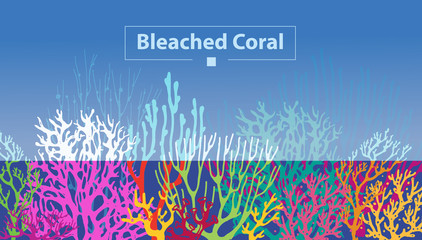 Coral Bleaching occurs rising sea temperatures and Global Warming are killing coral reefs