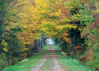 Fall trees line the Confederation Trail in rural Prince Edward Island, Canada.