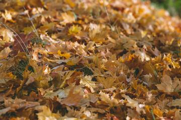 Im Herbst fallen die Blätter.
