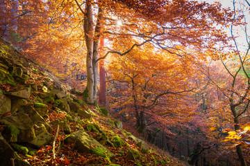 Landschaft im Herbst mit Wald bei strahlendem Sonnenschein