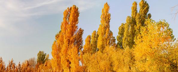 sunset sun illuminates autumn colored trees