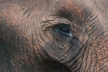 eye of an elephant