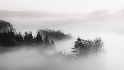Beautiful shot of a forest in a fog with a cloudy background black and white, great for background