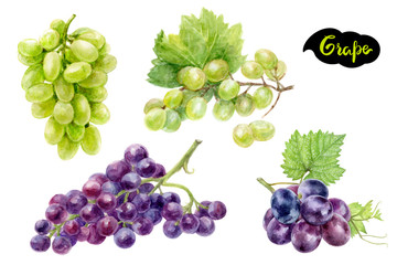 Grape set composition watercolor isolated on white background Fototapete