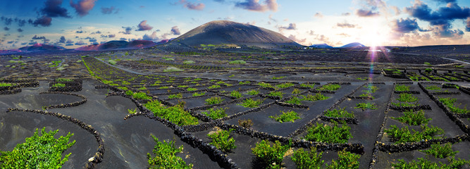 Fond de hotte en verre imprimé Vignoble La Geria vineyard on black volcanic soil.Scenic landscape with volcanic vineyards. Lanzarote. Canary Islands. Spain